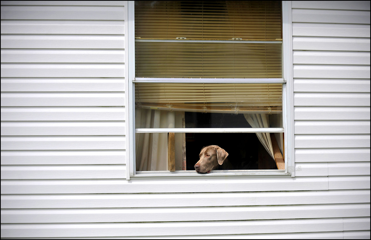 Doggie in the Window